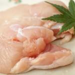 鶏ムネ肉で疲労回復:イミダペプチドが効く!?